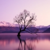 black withered tree surounded by body of water